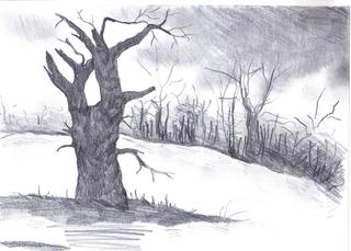 drzewo 320x229