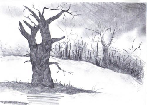 drzewo 800x573